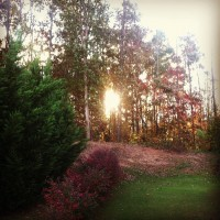 A_Backyard_Sunrise_II