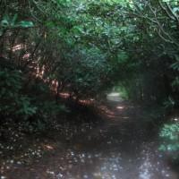 Raven Cliff Falls Hike