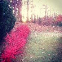 TR_A_Backyard_Sunrise