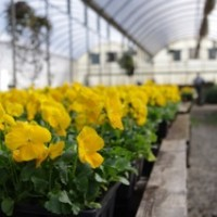 The Yellow Row Northside Greenhouse